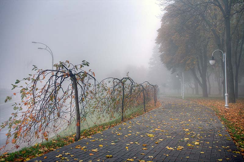 Сильний вітер зі зливами – якою буде погода на Прикарпатті у понеділок 24 вересня